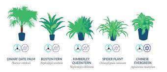 nasa reveals a list of the best air filtering houseplants women