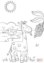 giraffe eating banana coloring page free printable coloring pages