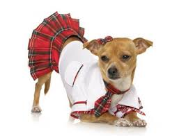 costumes for dogs school girl dog costume dog costumes