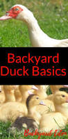 114 best best of backyard eden organic gardening gardening