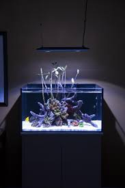 tips for building a house rooms with stunning aquariums decoholic room decorating ideas
