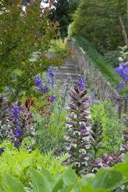 139 best flowers nasturtium tropaeolum images on pinterest