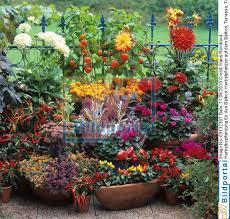 herbstbepflanzung balkon details zu 0003132307 herbstbepflanzung für den balkon djv