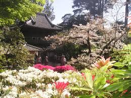 Botanical Gardens Golden Gate Park by San Francisco Photo Gallery Japanese Tea Garden Tony Quarrington