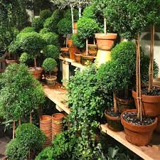Ny Topiary - 229 likes 6 comments sarah bray sarahamandabray on instagram