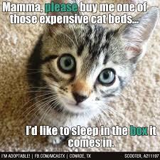 Funny Kitten Memes - funny kitten memes 5