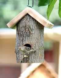 automatic bird feeder best photos of easy to make bird houses