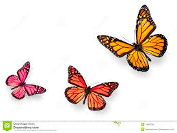 monarch butterfly blue and orange stock photo image 14987060