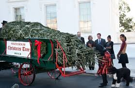 Npr White House Christmas Decorations by White House Christmas Trees A Look Back At The Decorated Greens