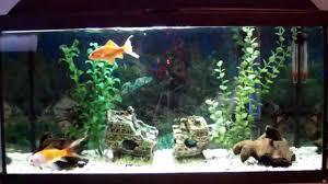 idee deco aquarium mon aquarium youtube