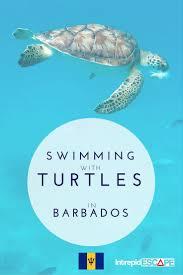 best 25 barbados beaches ideas on pinterest barbados holidays