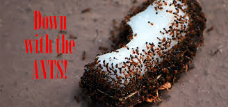 Natural Ant Killer For Kitchen by Diy Ant Poison The Easiest Safest U0026 Most Effective Diy Ant Killer