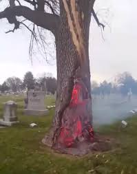 footage shows tree on after being struck by lightning