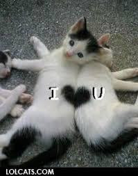 I Love U Meme - i love you cat meme cat planet cat planet