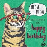 Cat Birthday Cards Cat Birthday Card Unusual Quirky Cards Themed On Cats