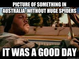 Huge Spider Memes Image Memes - picture of something in australia without huge spiders it was a