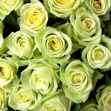 green roses bulk roses rosaholics premium fresh roses