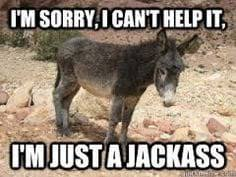 Funny Donkey Memes - donkey meme funny donkey pics pictures of a jackass