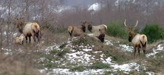 Washington wildlife images Elk season opens saturday in western washington the columbian jpg
