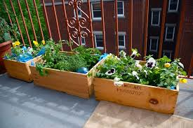 apartment patio small container vegetable gardening staradeal com