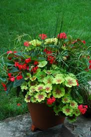 1021 best gardening and gardens container inspiration images on