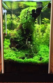 Japanese Aquascape by 98 Best Cube Inspration Images On Pinterest Aquarium Fish