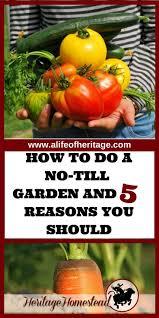 1593 best fun garden ideas images on pinterest veggie gardens