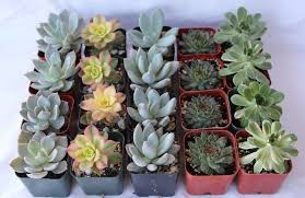 Flower Pot Wedding Favors - sample 5 beautiful 2 assorted succulent plants