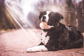 Dog Burial Backyard List Of Pet Cremation Services In Malaysia Perropet