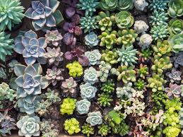 amazon succulents amazon now delivers succulents in case you want a super easy way