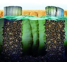lakes with zebra mussels are goners lock the trouble there