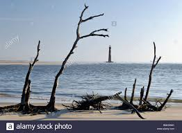 morris lighthouse and dead trees on folly in charleston