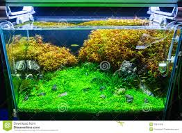 Planted Aquarium Aquascaping Good Tropical Home Plans 5 Aquascaping Planted Aquarium