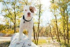 american pitbull terrier illegal are you harboring an illegal pet 7 surprising pets that may be
