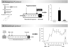 frontiers catamenial epilepsy discovery of an extrasynaptic