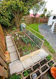 raised bed vegetable gardening in backyard domestic self