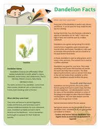 Dandelion Facts Lesson 2 Dandelion Diary