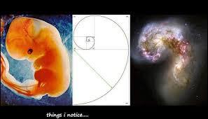 golden ratio dna spiral fibonacci spiral mommacommaphd