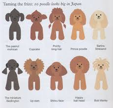 yorkie hair cut chart image result for best manly toy poodle cuts doggy stuff