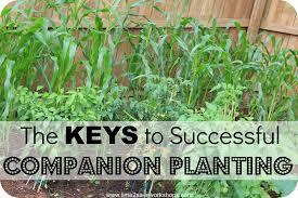 how to plant a vegetable garden layout best idea garden