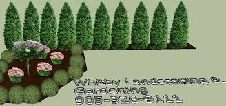 gardening services call 905 926 9111 design clean ups u0026 planting