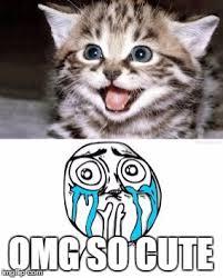 So Cute Meme - cute kitten meets crying because of cute guy imgflip
