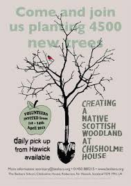 native scottish plants chisholme institute planting a native scottish woodland is