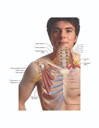 Tos Thoracic Outlet Syndrome Brachial Plexus Nerve Compression