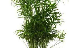 how to kill mosquitoes on indoor plants home guides sf gate
