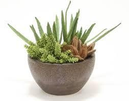 distinctive designs aloe and succulents desk top plant with sora