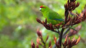 plants native to new zealand new zealand birds a z native animal conservation