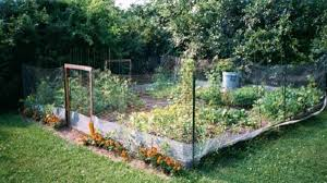 Garden Barrier Ideas Garden Swimming Pool Green Lawn Orange Flowers Garden Fences