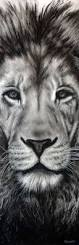 african animal love animals u0026 pets pinterest lion collant