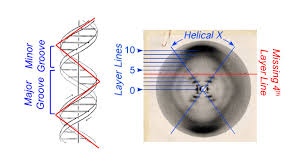 x marks the spot of the double helix the dish on science